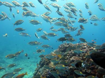 ウチザン礁 慶良間