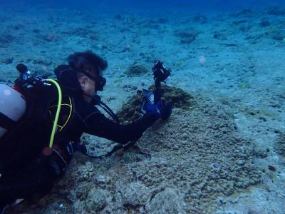 水中写真 ダイバー