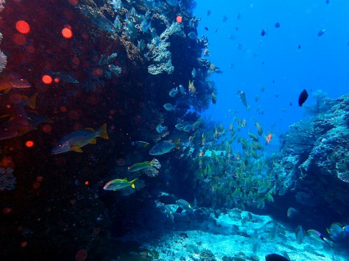群れ ウチザン礁