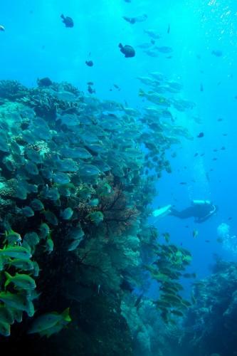 慶良間ウチザン礁