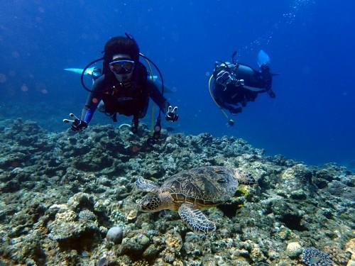 ダイバーとアオウミガメ