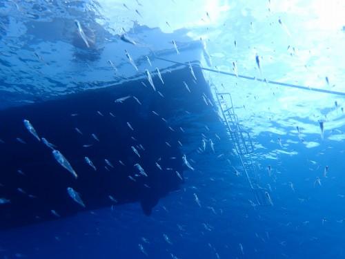沖縄ボート