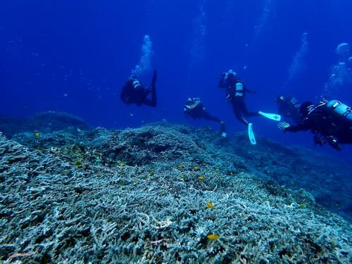 サンゴゾーン