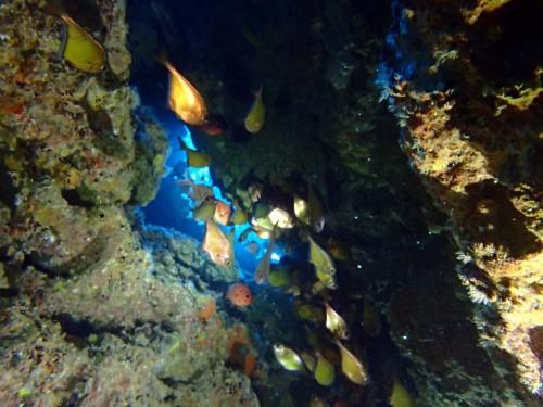 ハタンポと洞窟