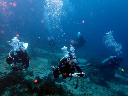 フィリピン ダイビング
