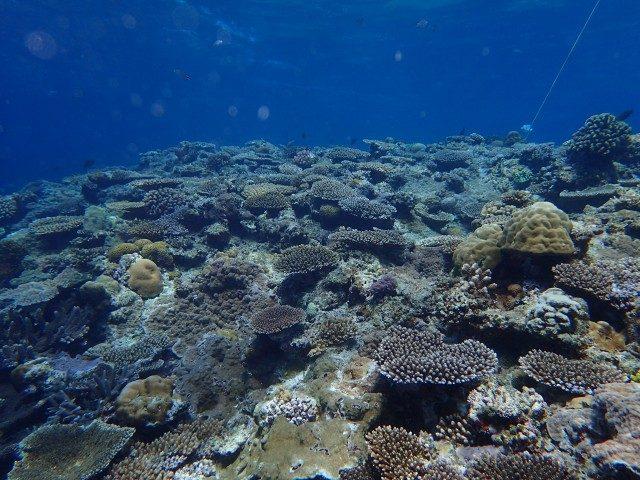 クエフ島 サンゴ