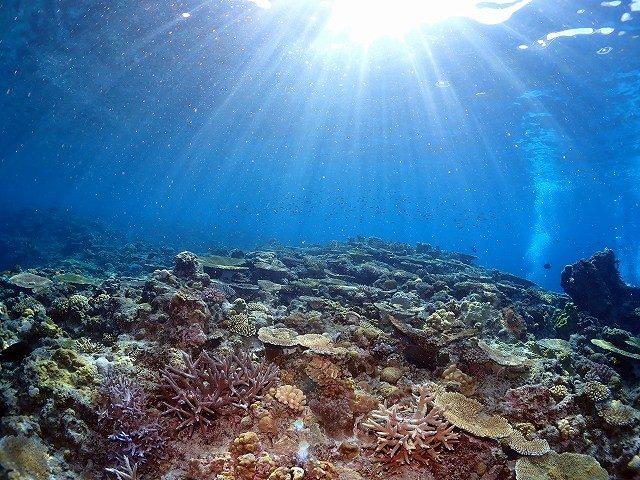 サンゴと光