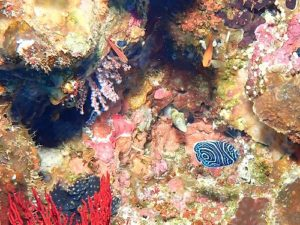 タテキンの幼魚