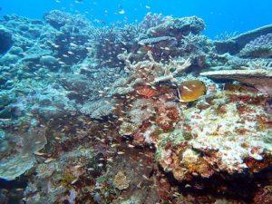 サンゴと群れ