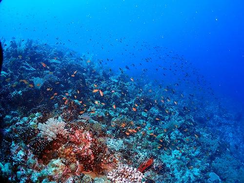サンゴの棚