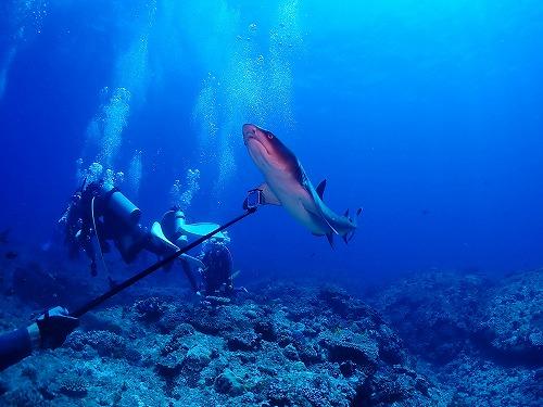 #サメとハイタッチ