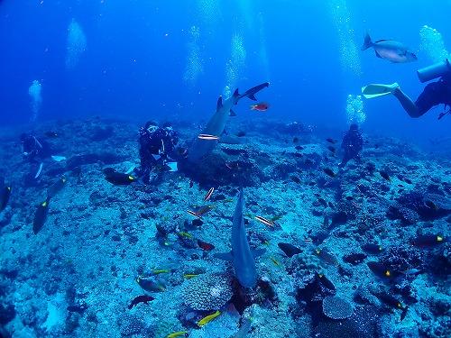 サメとダイバー